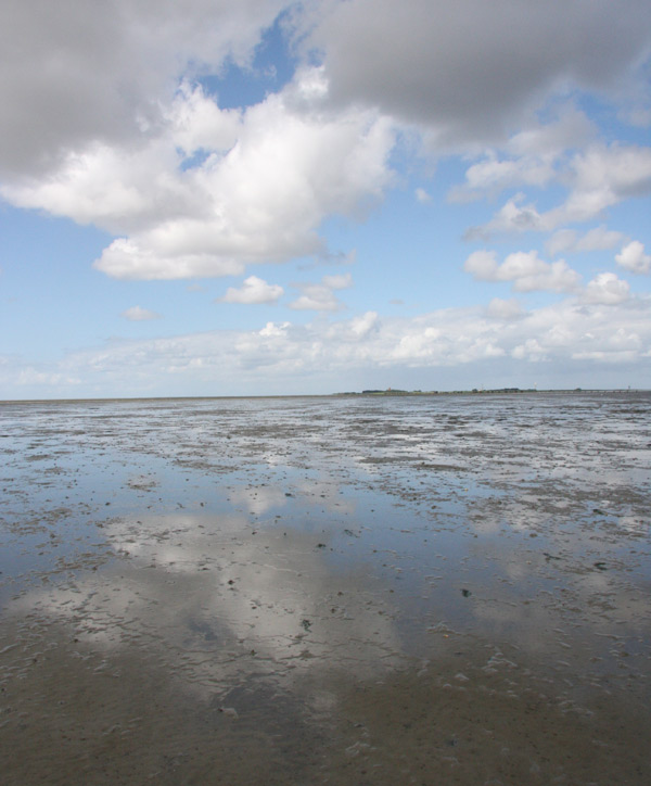 Picture of the mudflats, you can see the island Neuwerk in the background, clouds are reflected in the mud